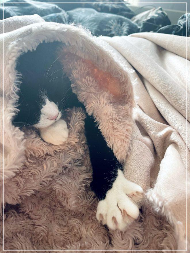 Katten Jansson under filten