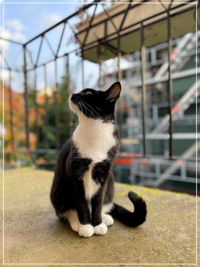 Kitten Jansson på balkongen