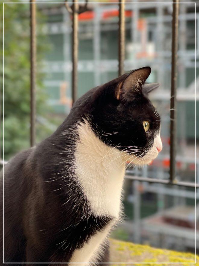 Kitten Jansson tittar nyfiken på vad som händer på gatan snett nedanför balkongen