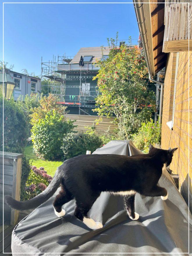 Kitten Jansson på grillen på altanen